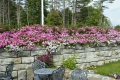 Annuals - Moultonborough NH