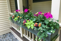 WINDOW BOX BRIGHT
