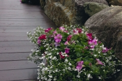 window-boxes-on-dock