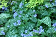Perennials New Hampshire