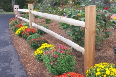 fall-new-woodshed-mums