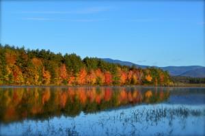 foliage reflection 1