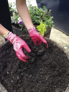 use potting soil rich in organic matter