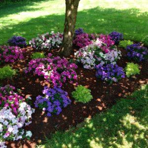 annuals under tree