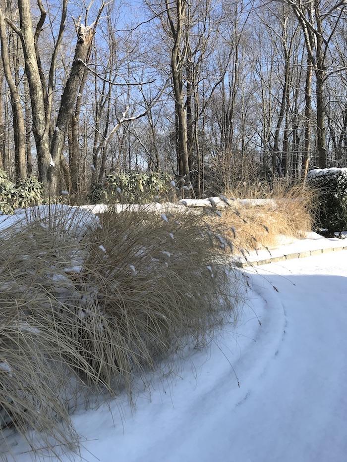 Ornamental Grass Winter Garden